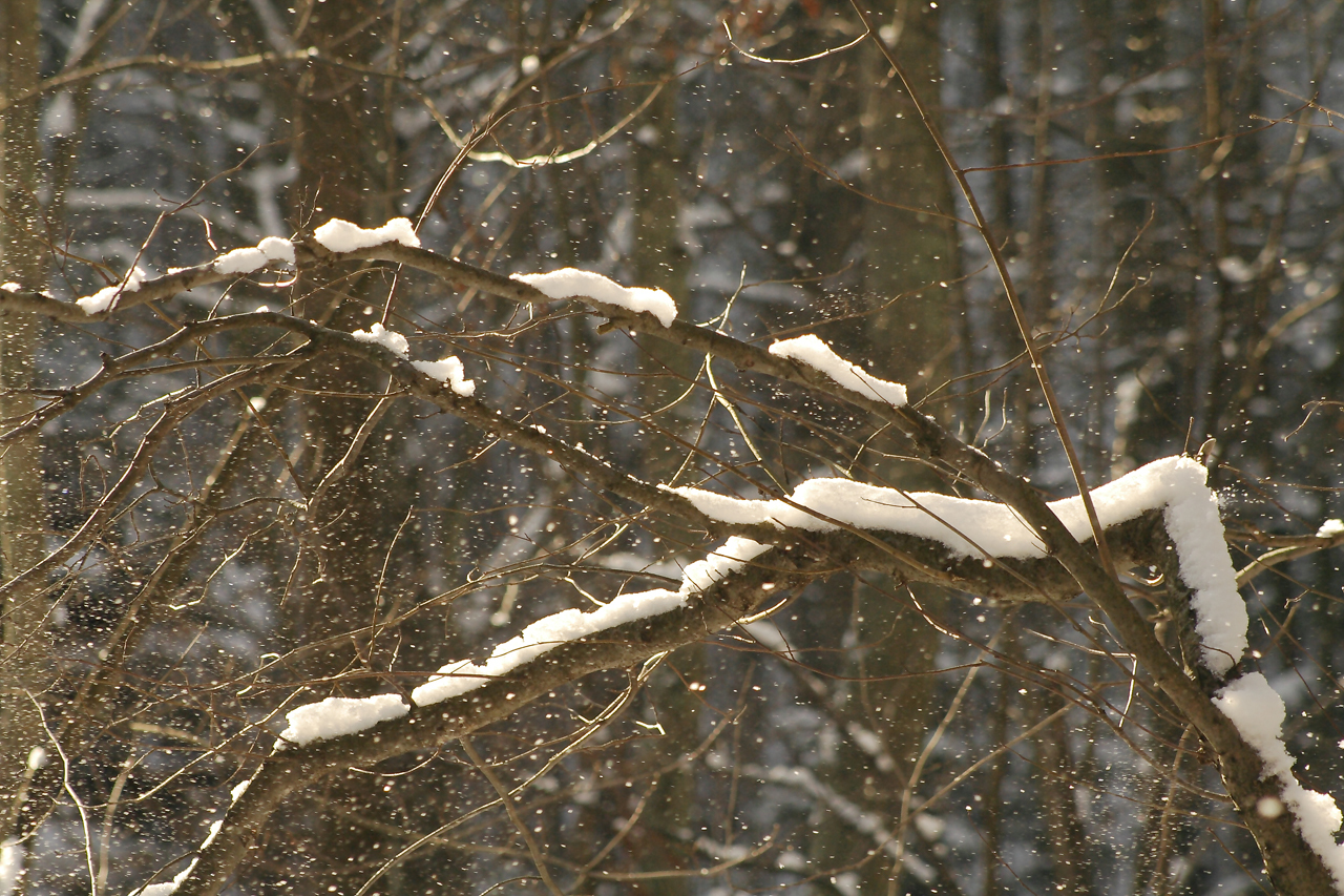 winter snow Trees branches