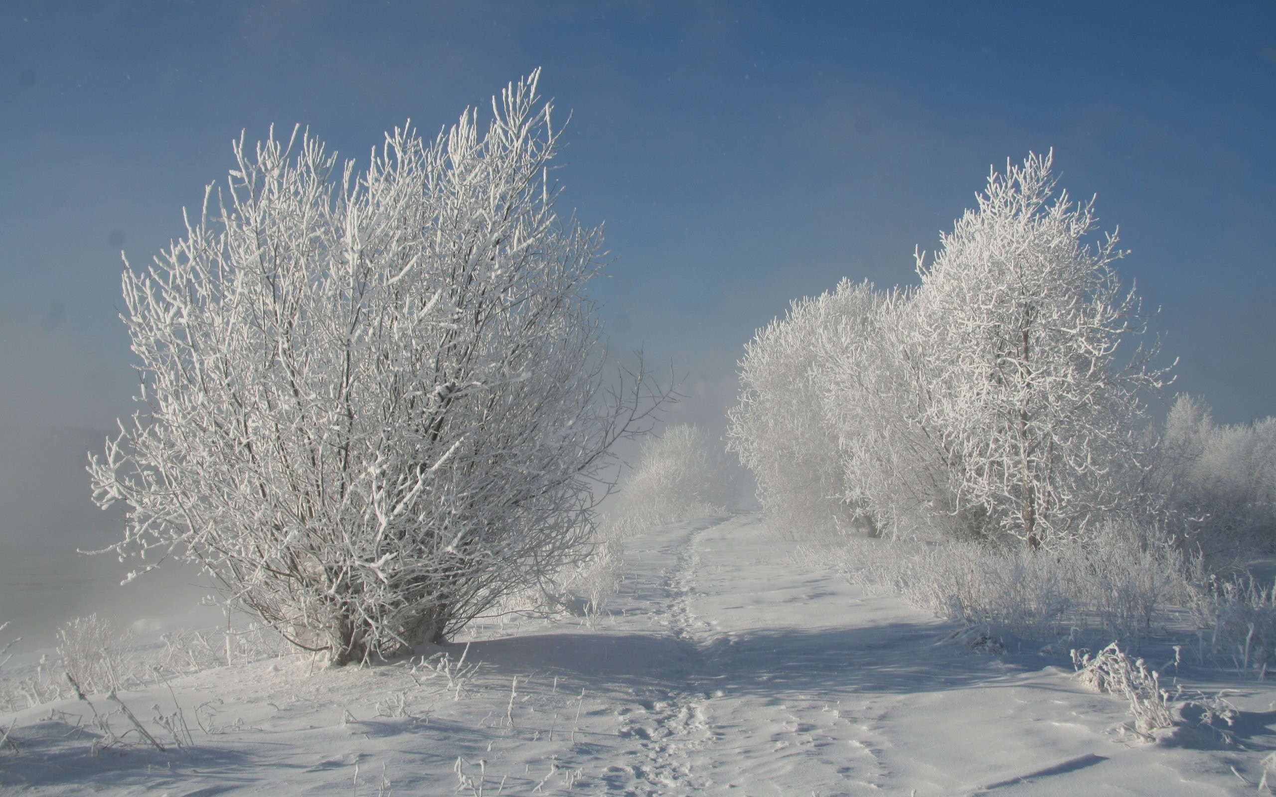 winter snow Trees paths HD Wallpaper
