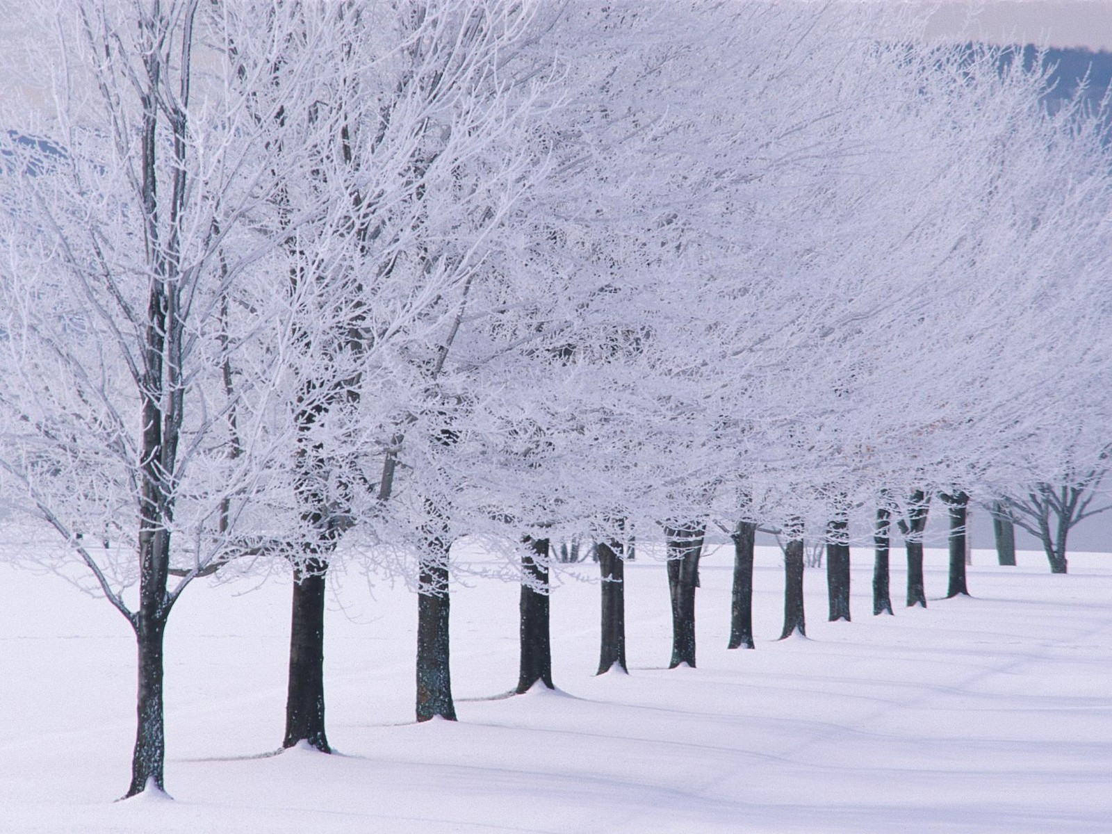 winter snow Trees white HD Wallpaper