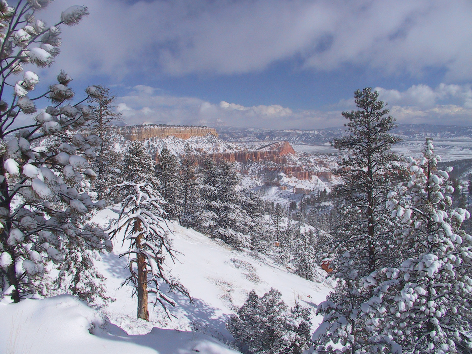 winter storm at bryce HD Wallpaper