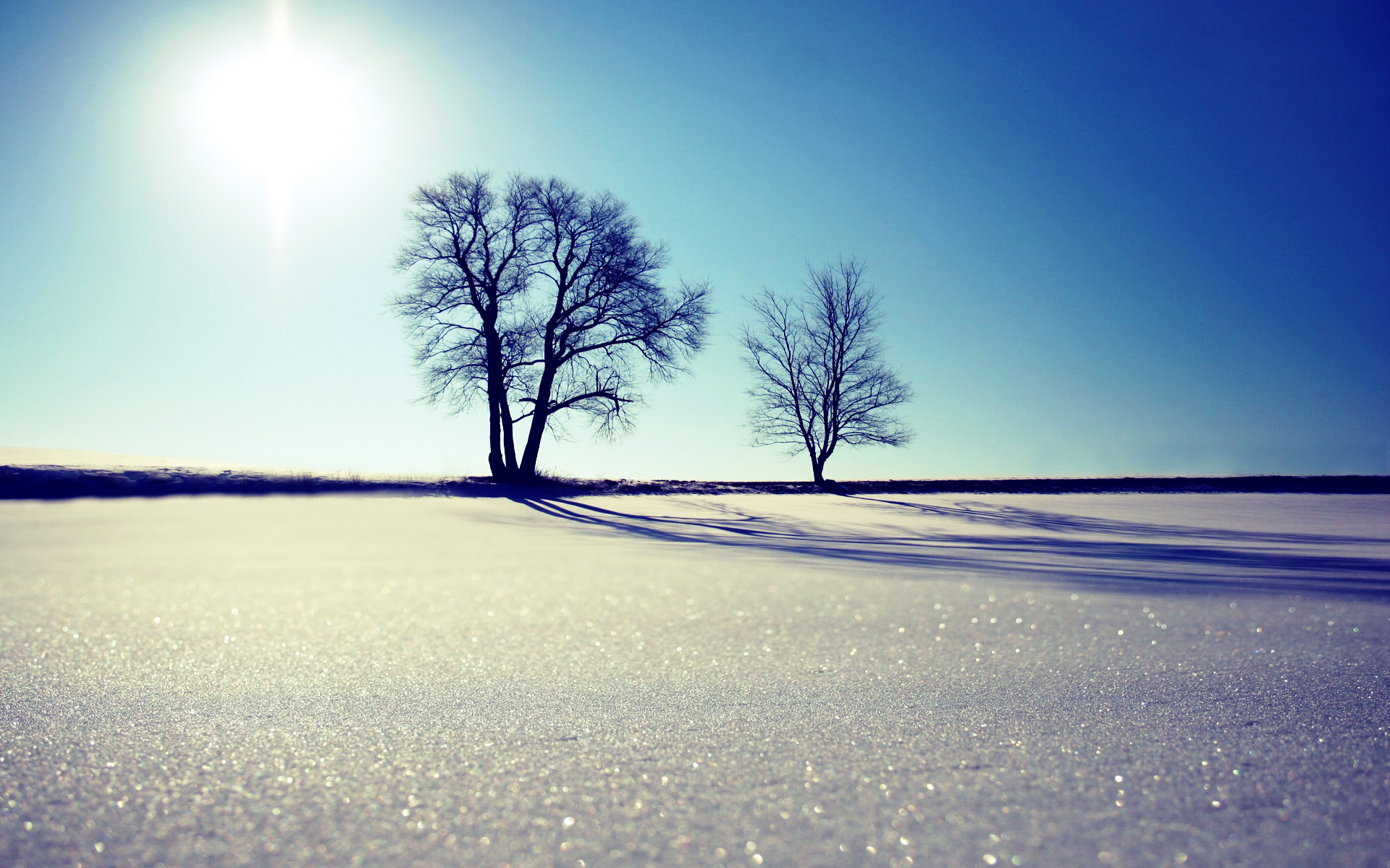 winter sun Trees snow HD Wallpaper