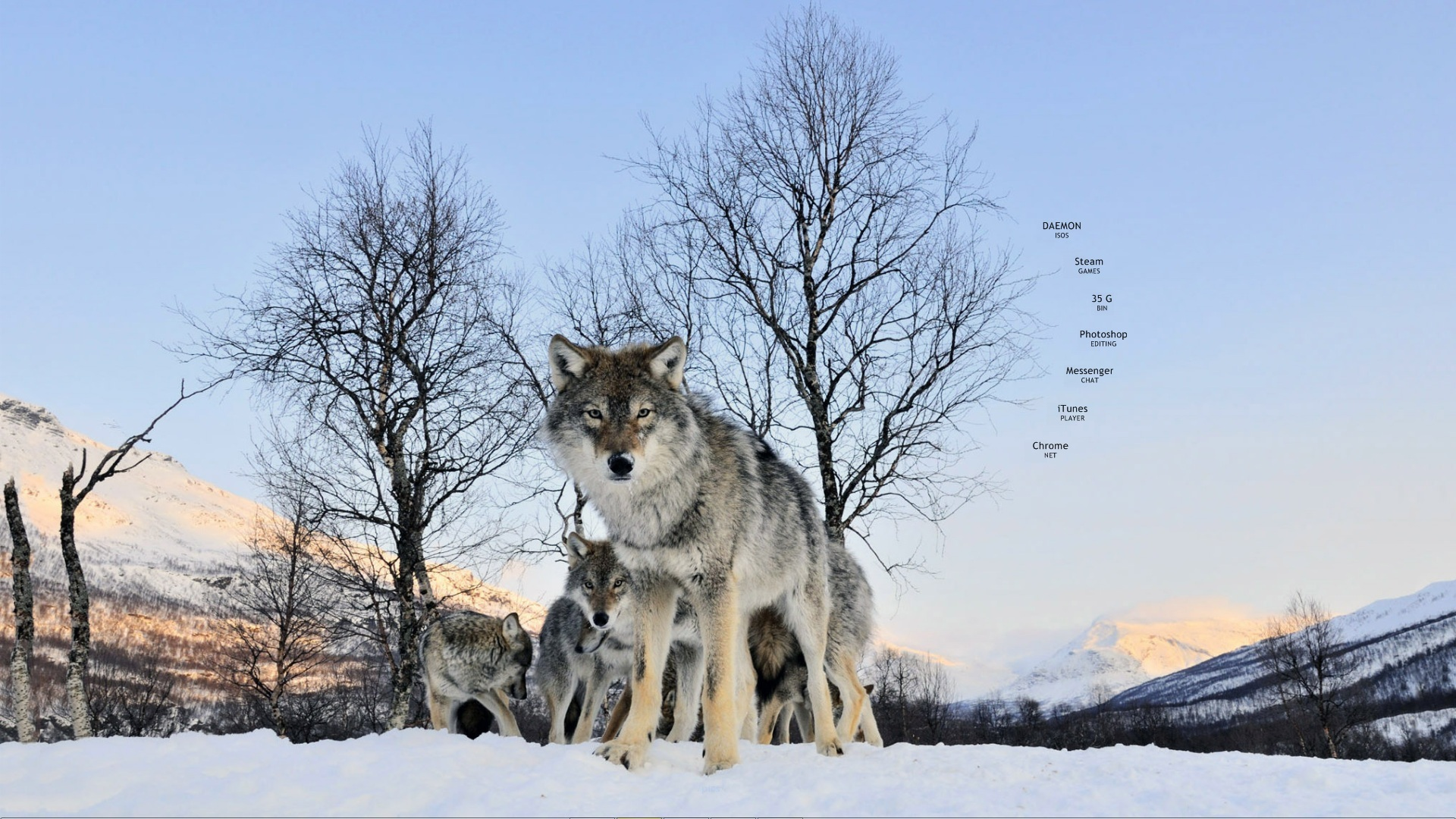 Wolves wolf Animals HD Wallpaper