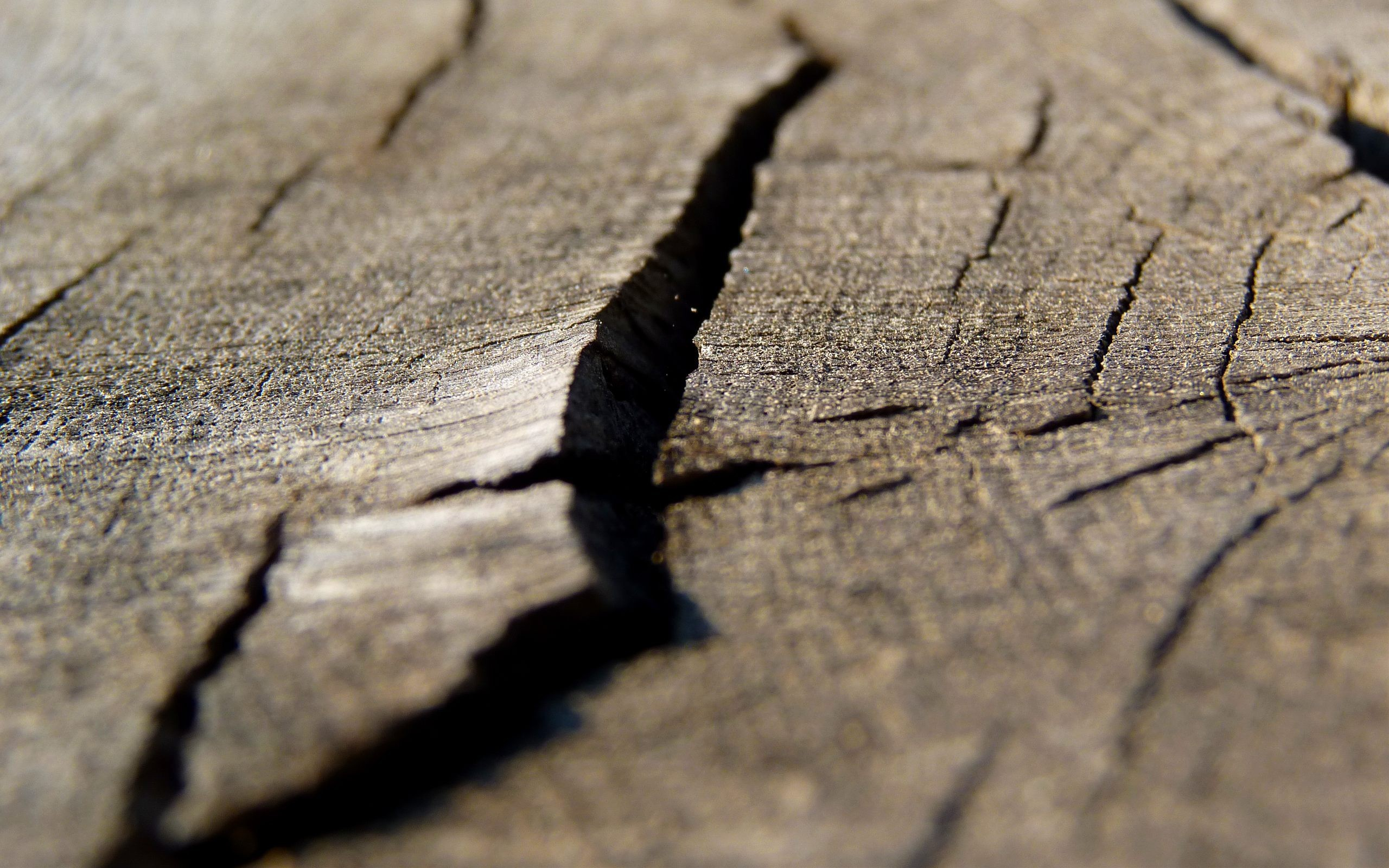 Wood HD Wallpaper
