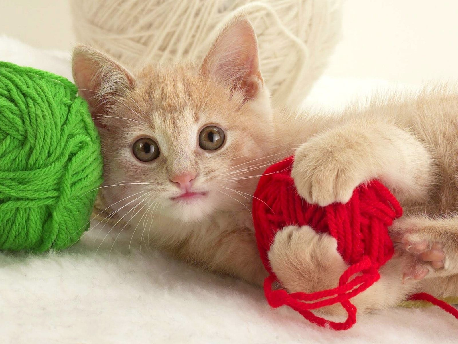 yarn Green red cats HD Wallpaper