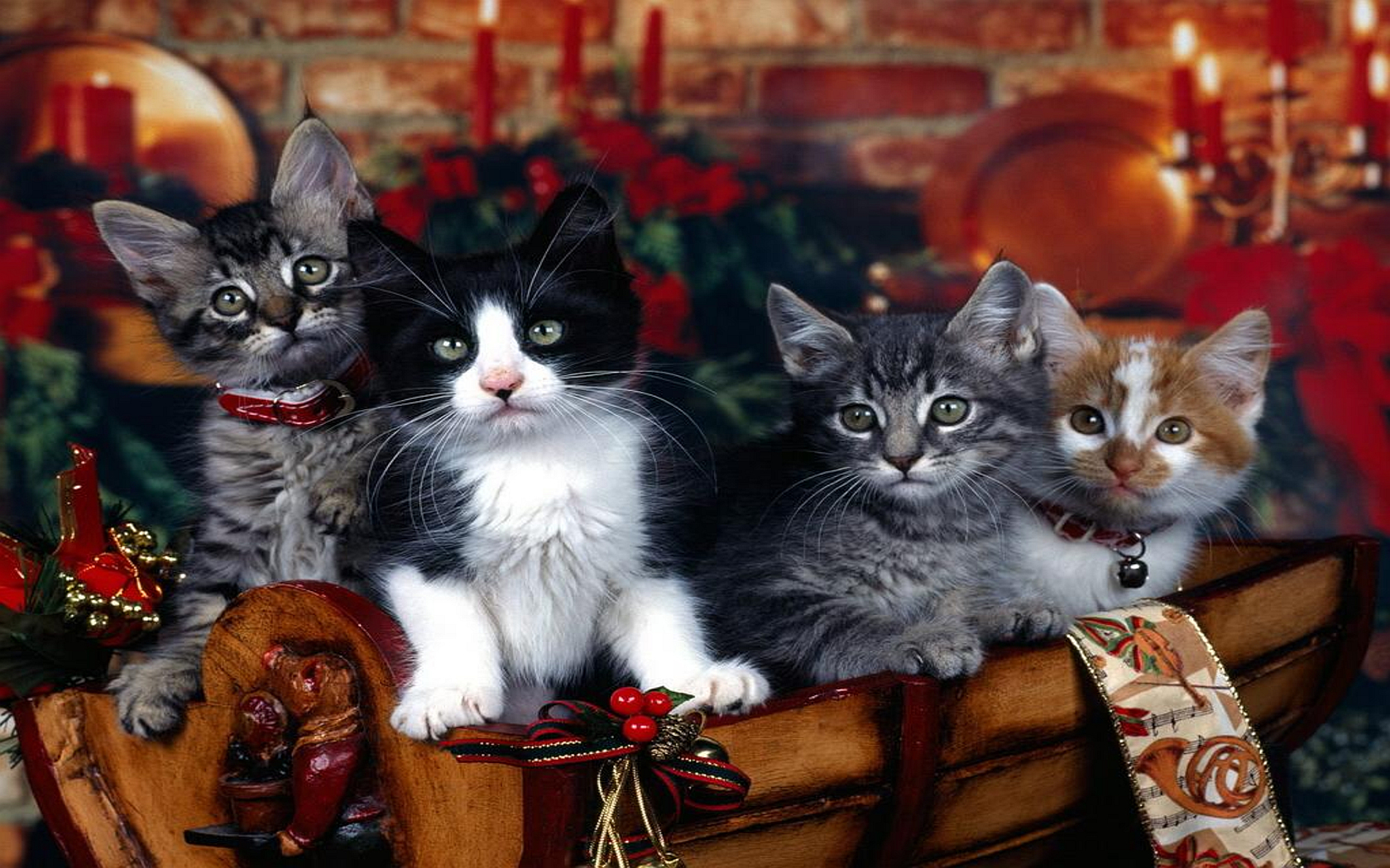 zomg xmas Kittens animal HD Wallpaper